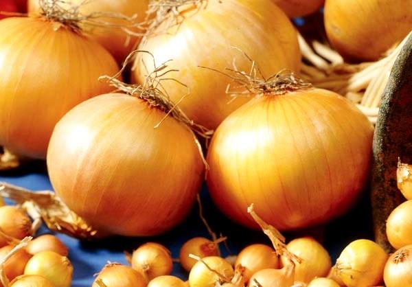 Как и когда сажать (сеять) лук севок на рассаду в 2019 по лунному календарю