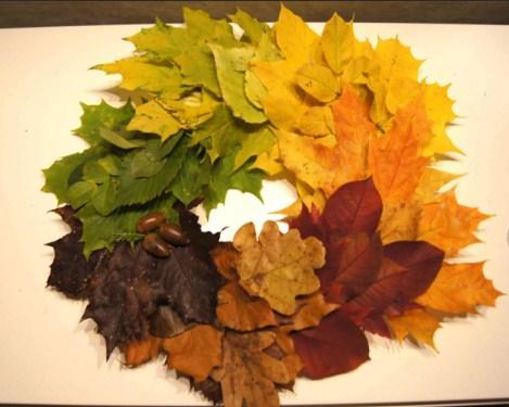 458-6 Поделки своими рукам на тему осень в садик из природного материала